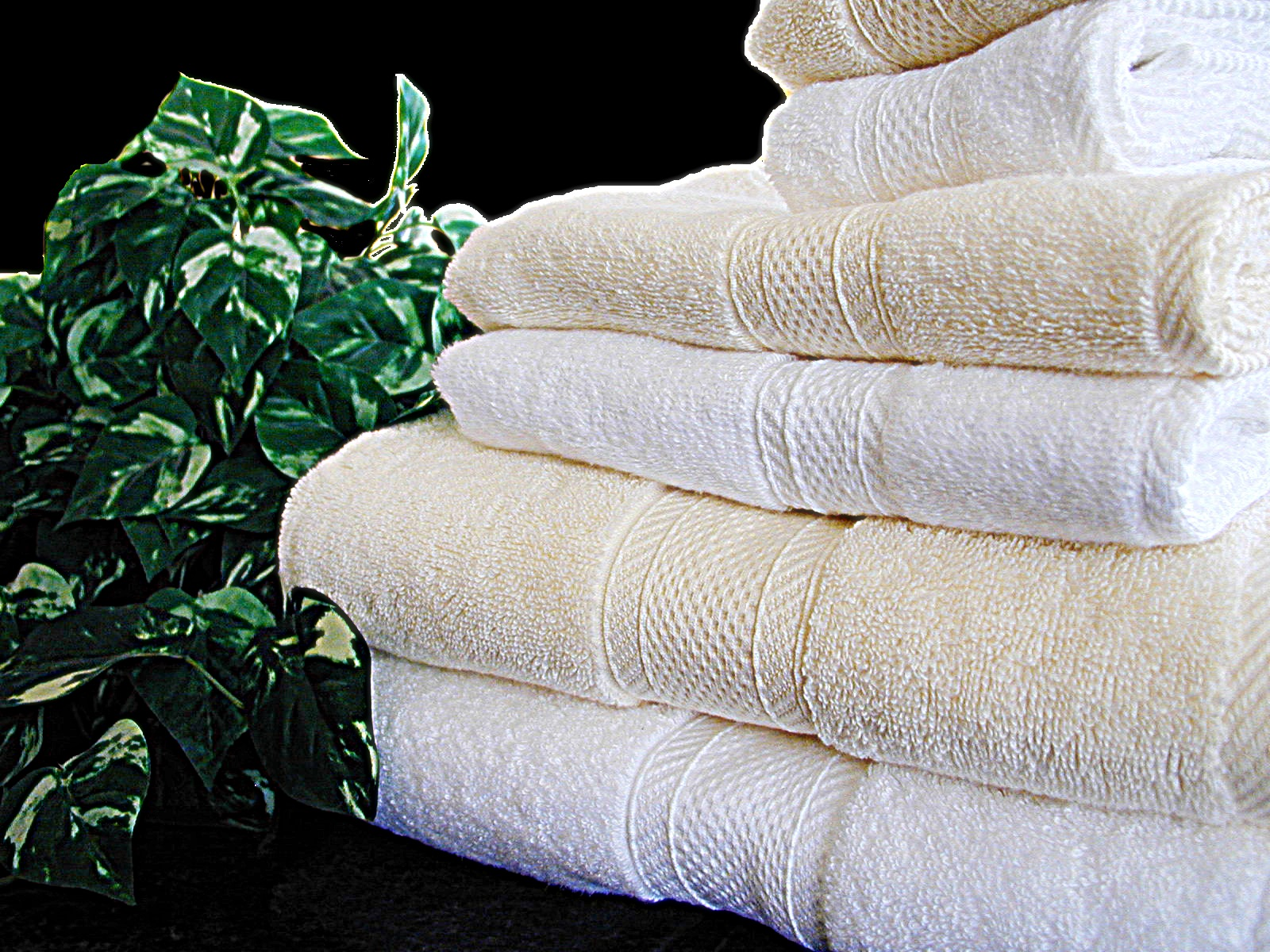 Towels Hotel miasma. Master Linens  Factory direct finest hotel towels in the world